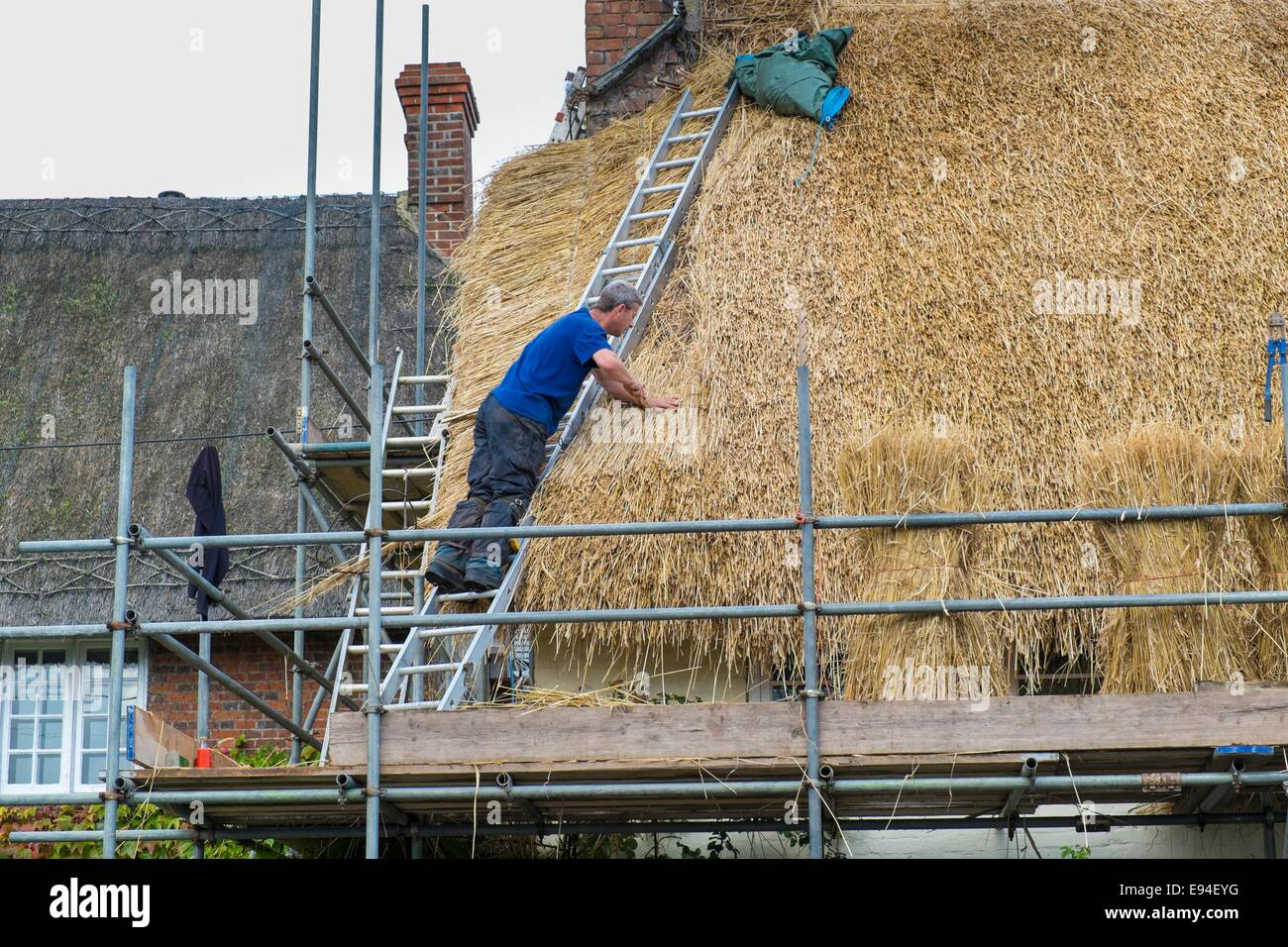Thatcher re roofing with wheatgrass thatch. - Stock Image