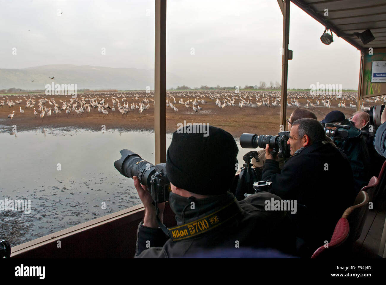 Photographers in the Hula valley, Israel - Stock Image