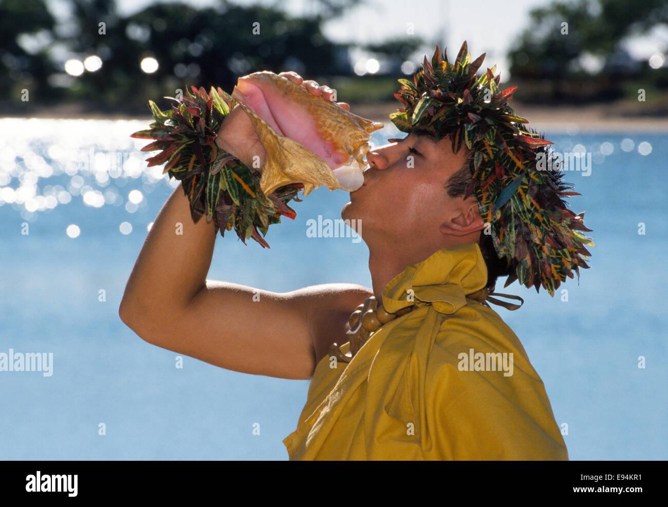 A Hawaiian man blows a conch shell to trumpet a loud fanfare that announces the beginning of a luau in Honolulu, - Stock Image