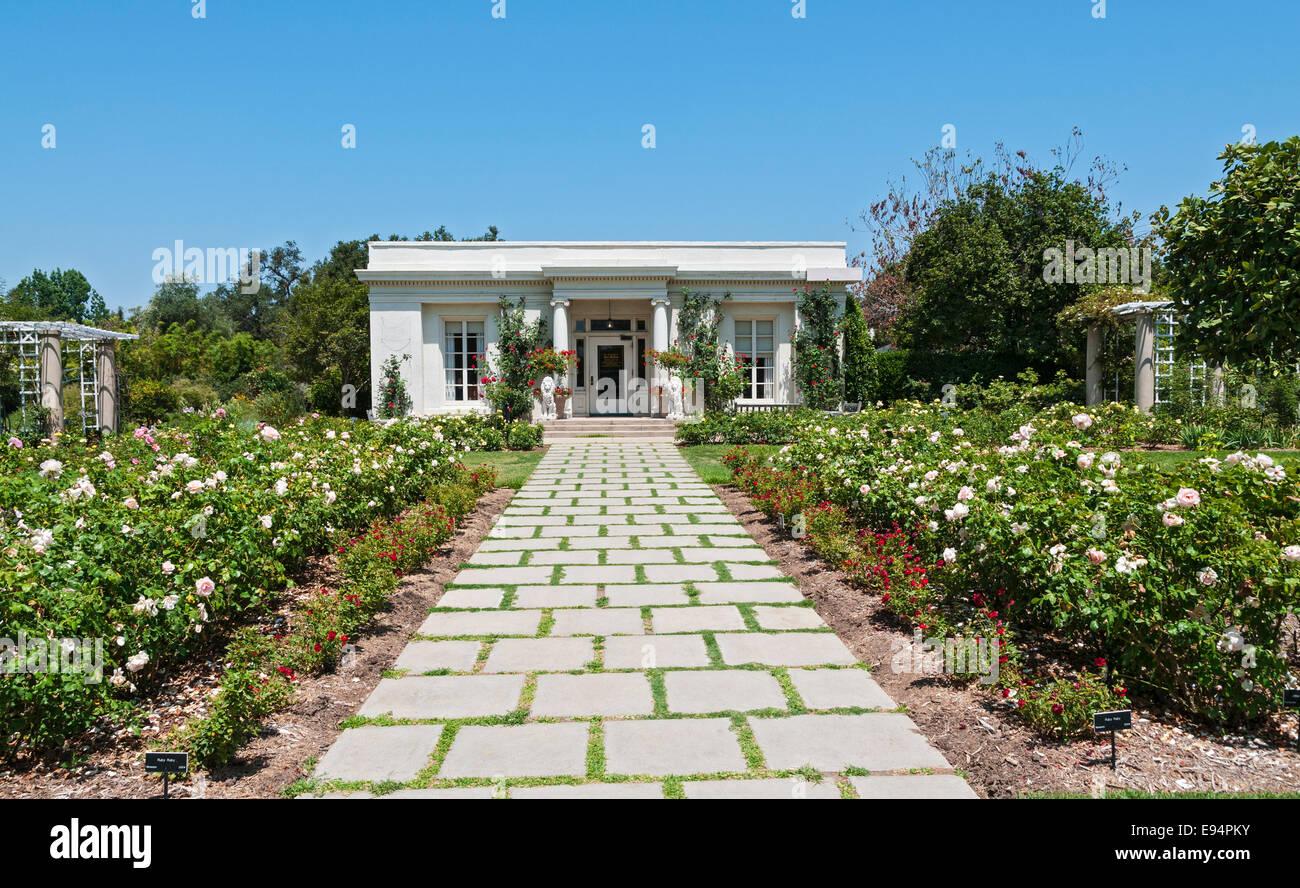 California San Marino The Huntington Botanical Gardens Rose