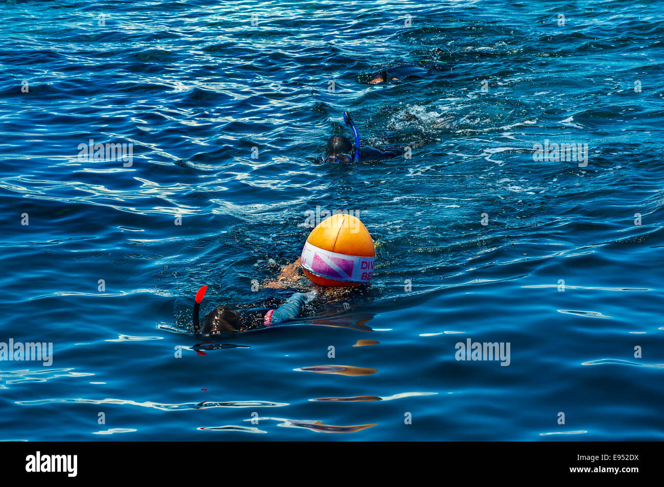 Snorkeler with diving buoy, Wakatobi Dive Resort, Sulawesi, Indonesia - Stock Image