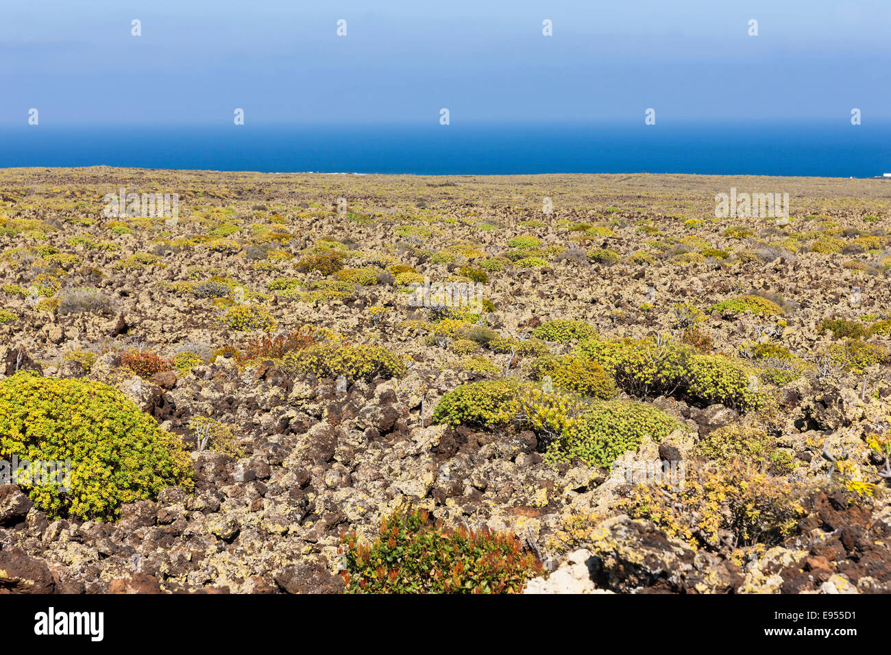 Malpais de la Corona, ropy lava, lava field from the Corona volcano covered with moss and lichen, Arrieta, Caleta - Stock Image