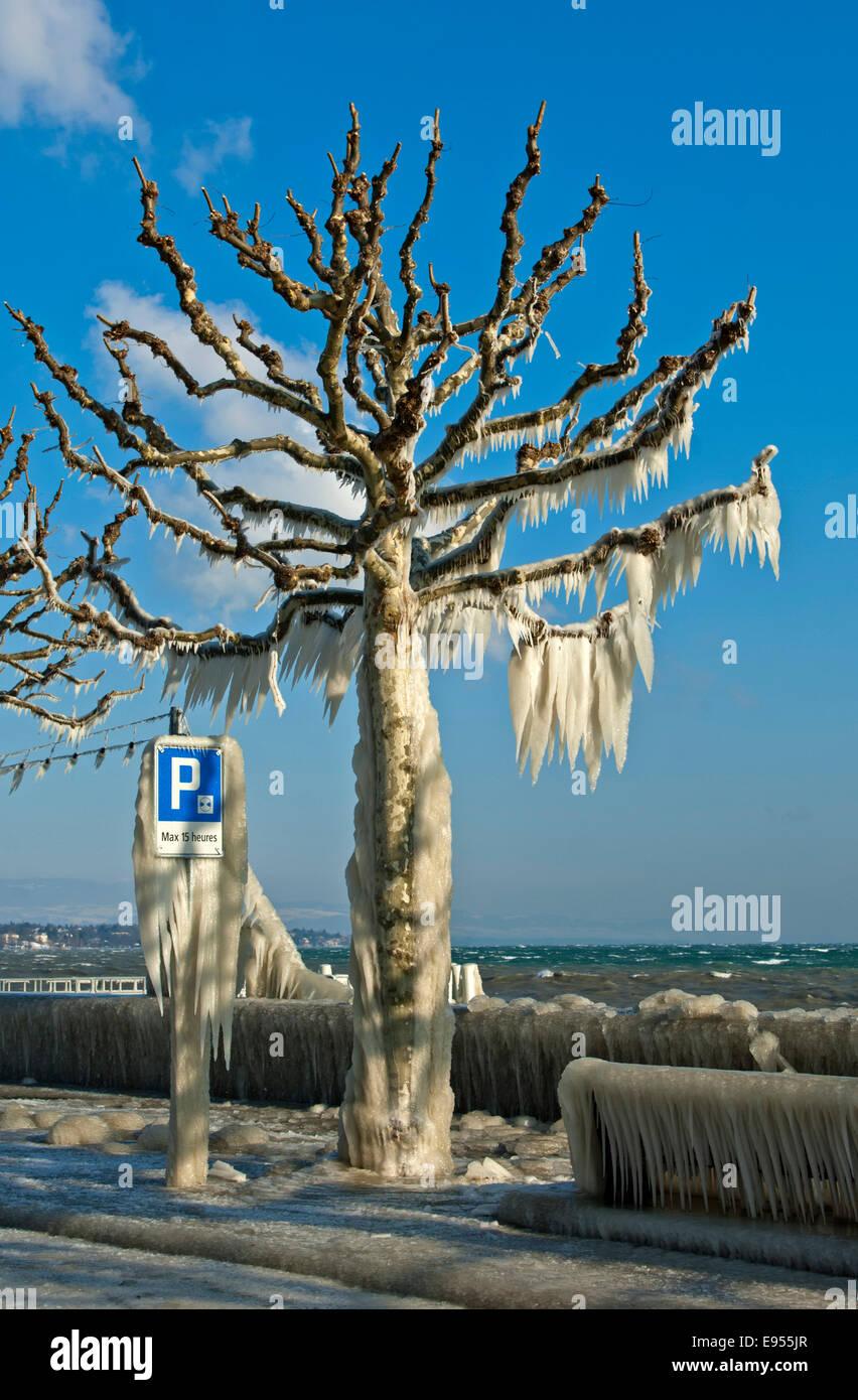 Tree coated with a thick layer of ice on promenade on Lake Geneva, Versoix, Canton of Geneva, Switzerland - Stock Image