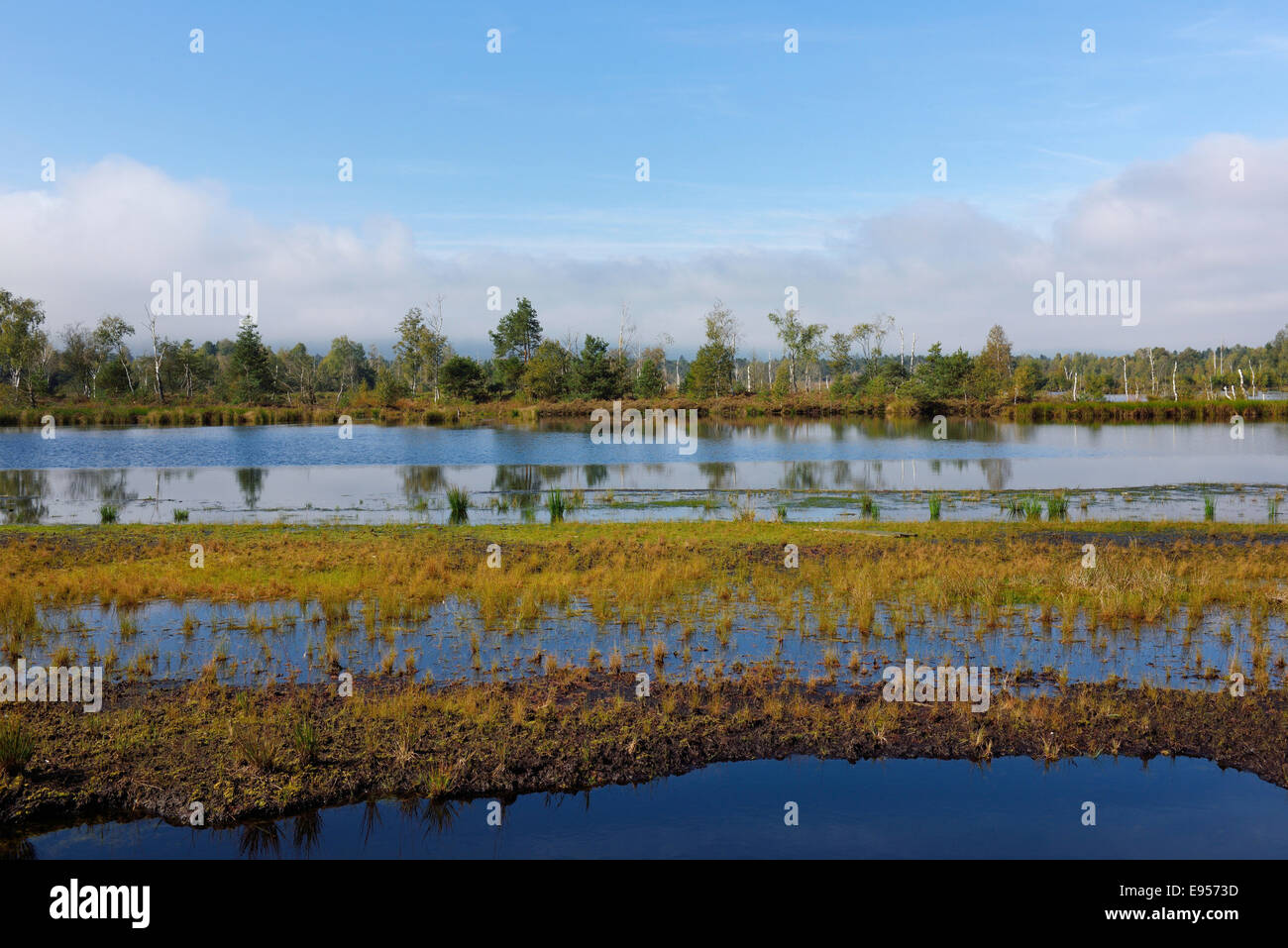 Waterlogged, renatured bog with bulrushes (Schoenoplectus lacustris), common reed (Phragmites australis) and birches Stock Photo