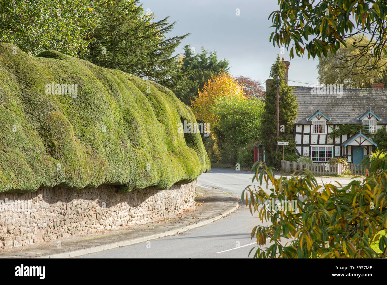 The rural village of Brampton Bryan and its wonderful Yew hedge,  Herefordshire, England - Stock Image