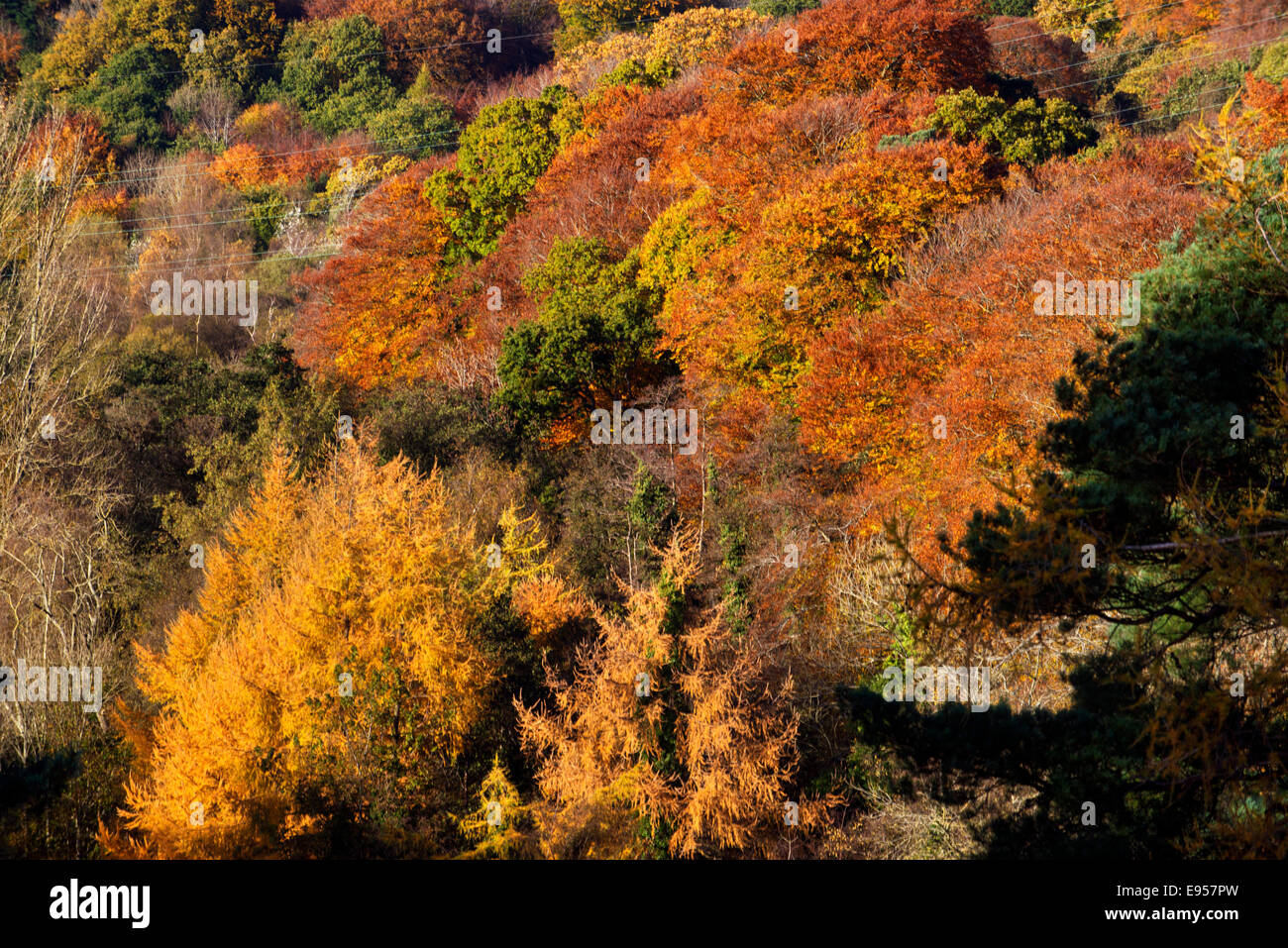 Lagan valley regional park, Belfast, Northern Ireland, autumn, fall, barnets park, Malone house - Stock Image