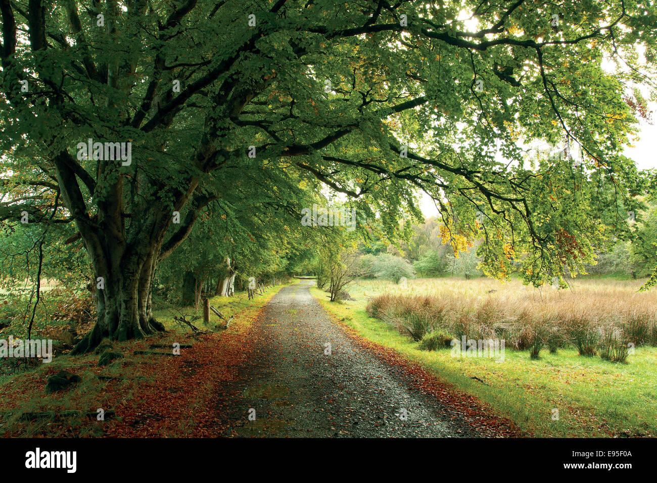 The Strath of Arisaig, Arisaig, Lochaber - Stock Image