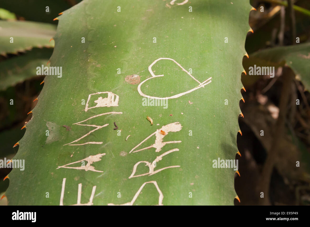Names and words carved into a plant leaf graffiti vandalism panajachel guatemala