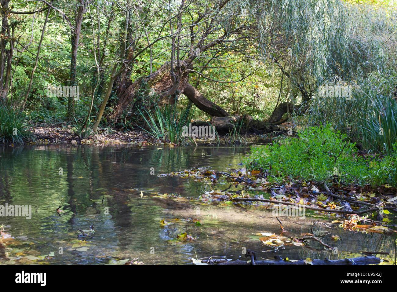river colne in autumn sunlight - Stock Image