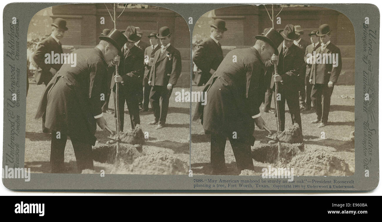 'May American manhood be sturdy as the oak' - President Roosevelt planting a tree, Fort Worth, Texas. - Stock Image