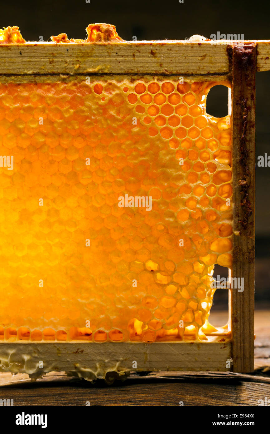 Honeycomb in a wooden frame - Stock Image