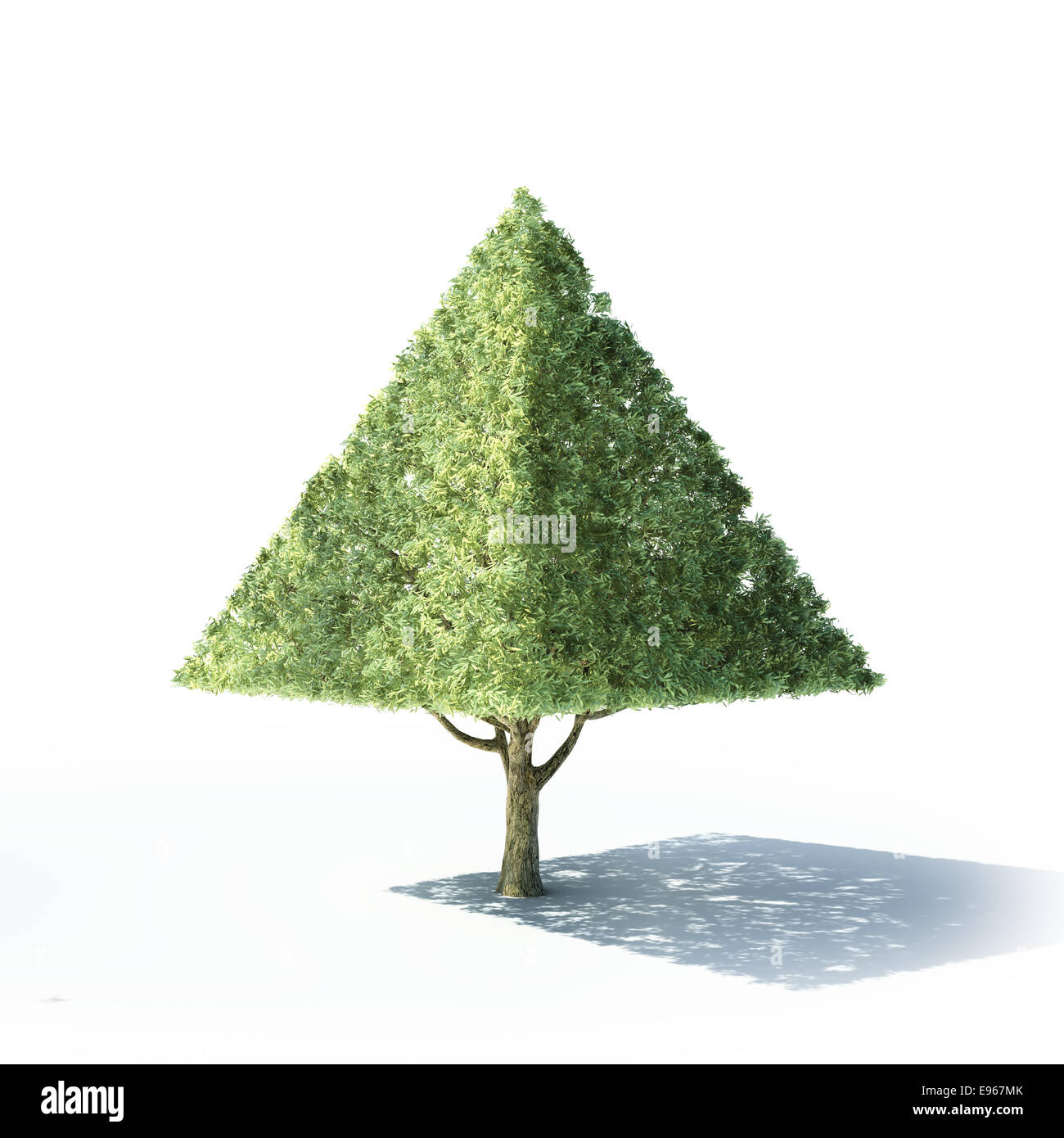 Pyramid shaped tree on a white background - Stock Image