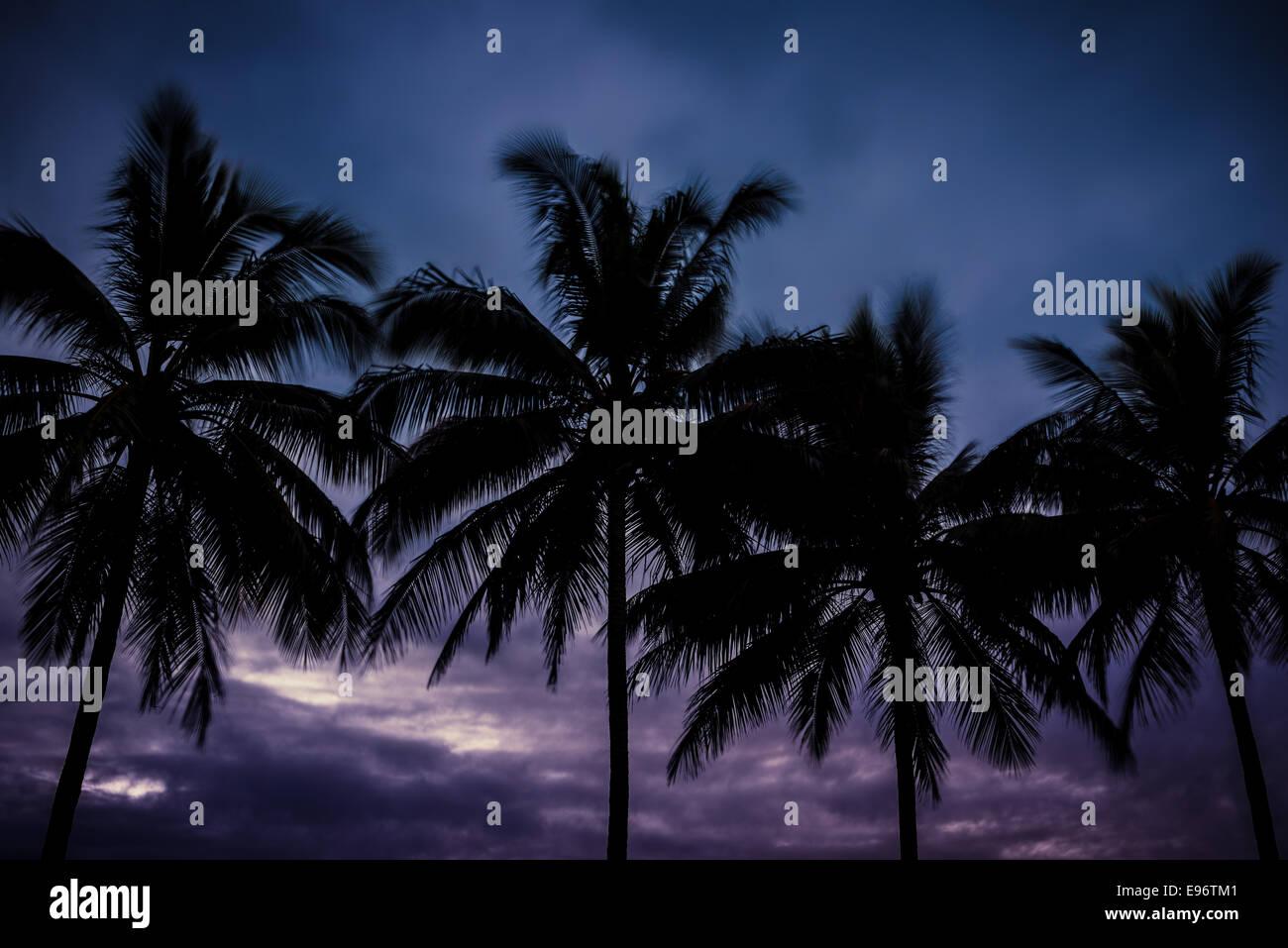 Palm trees at sunset at Port Douglas - Stock Image