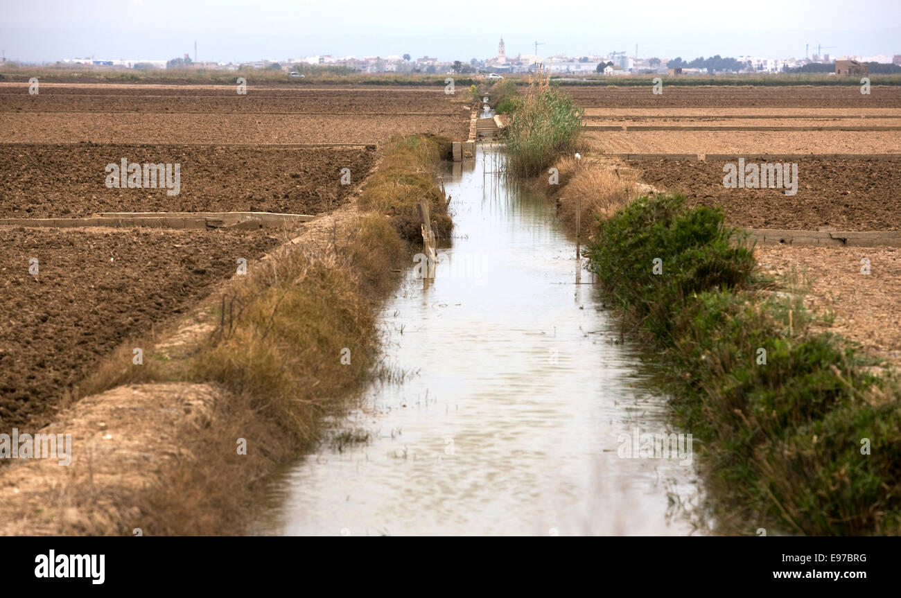 South of Valencia, Albufera, rice fields irrigated - Stock Image
