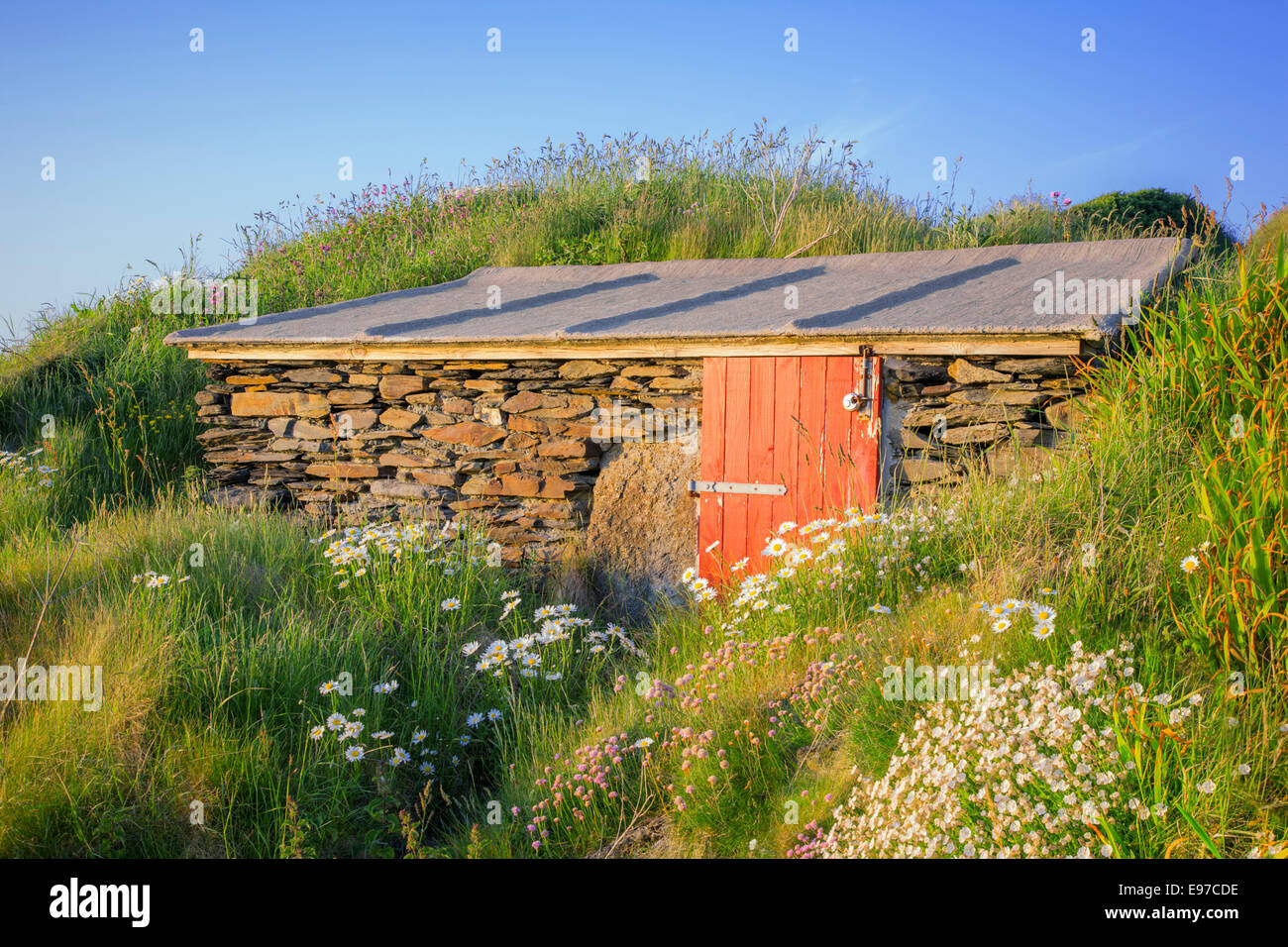 Stone shed surrounded by wild flowers on the Pembrokeshire coast. Stock Photo