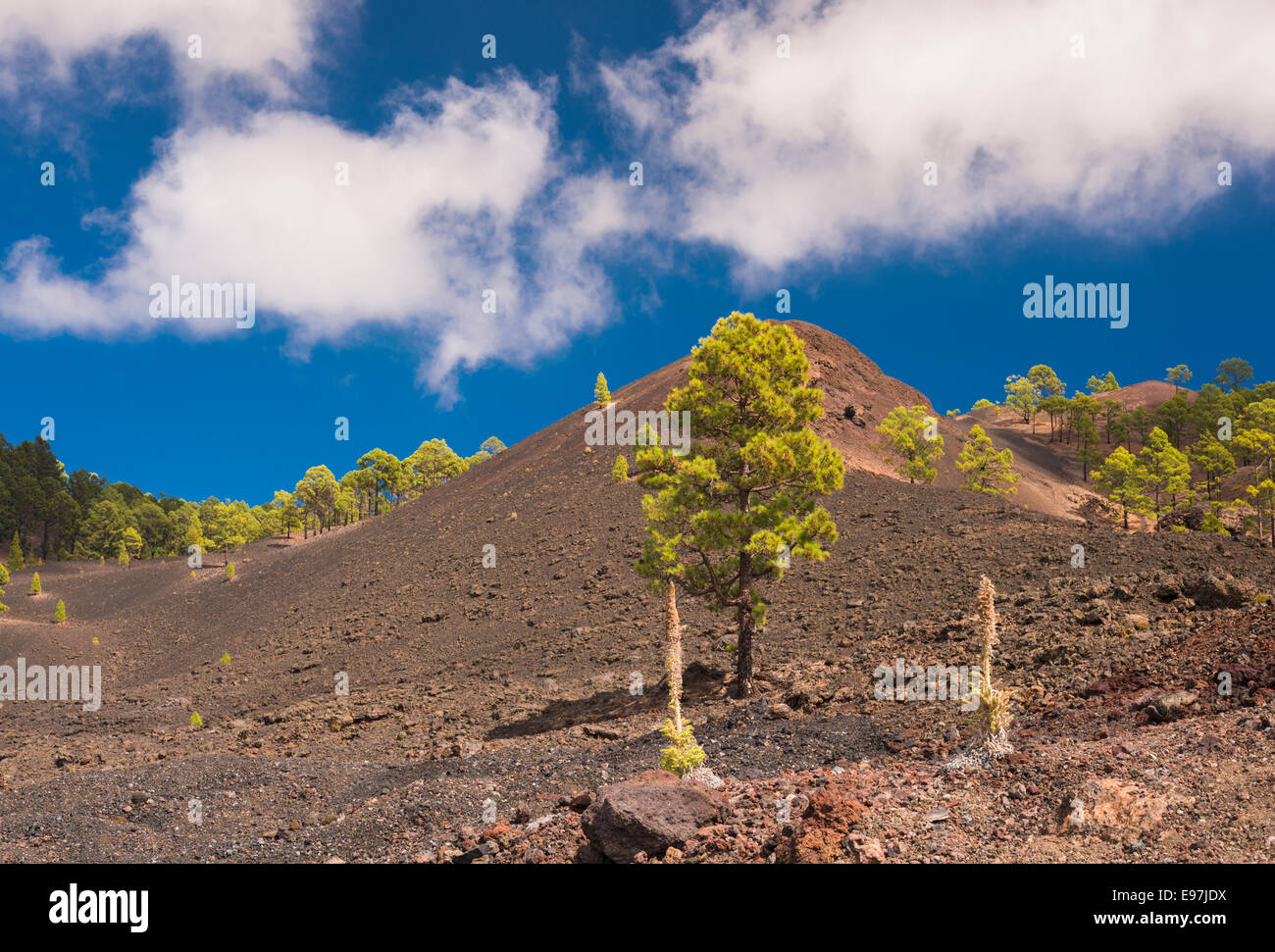 Montana Boca Cangrejo, a scoria cone in western Tenerife formed in the 1492 eruption, with taginaste rojo in foreground Stock Photo