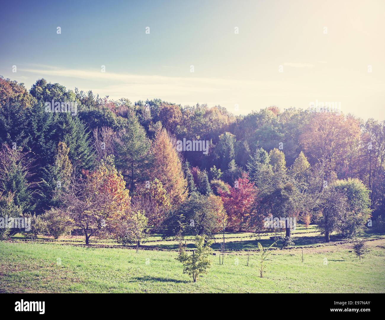 Autumn vintage retro nature background. - Stock Image
