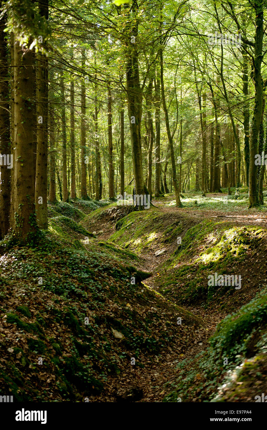 Trench of Thirst in the Bois d'Ailly in the St Mihiel Salient. WWI Battlefield south of Verdun, France. October - Stock Image
