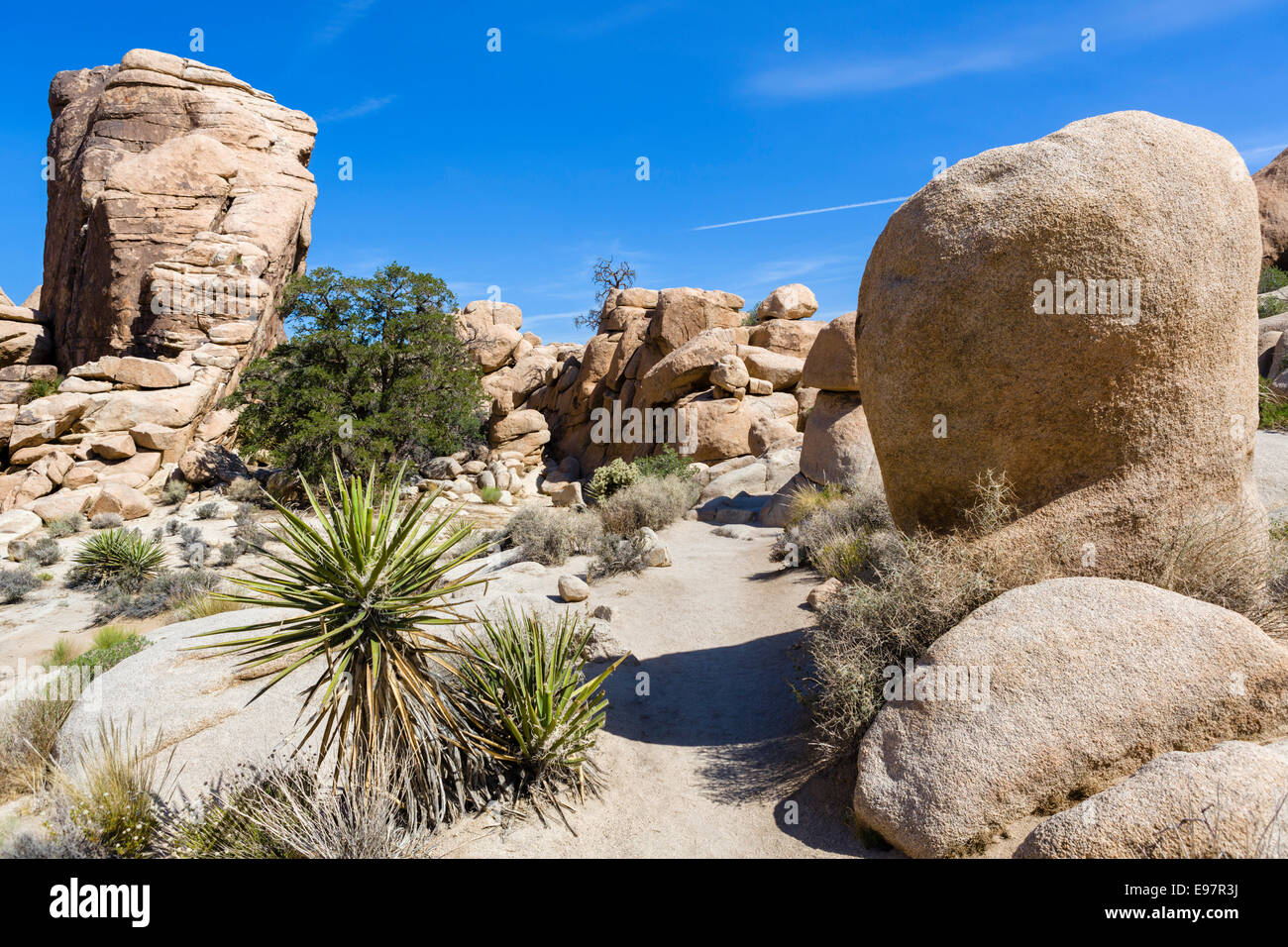 Trail in Hidden Valley, a former cattle rustler hide-out, Joshua Tree National Park, San Bernadino County, California, - Stock Image