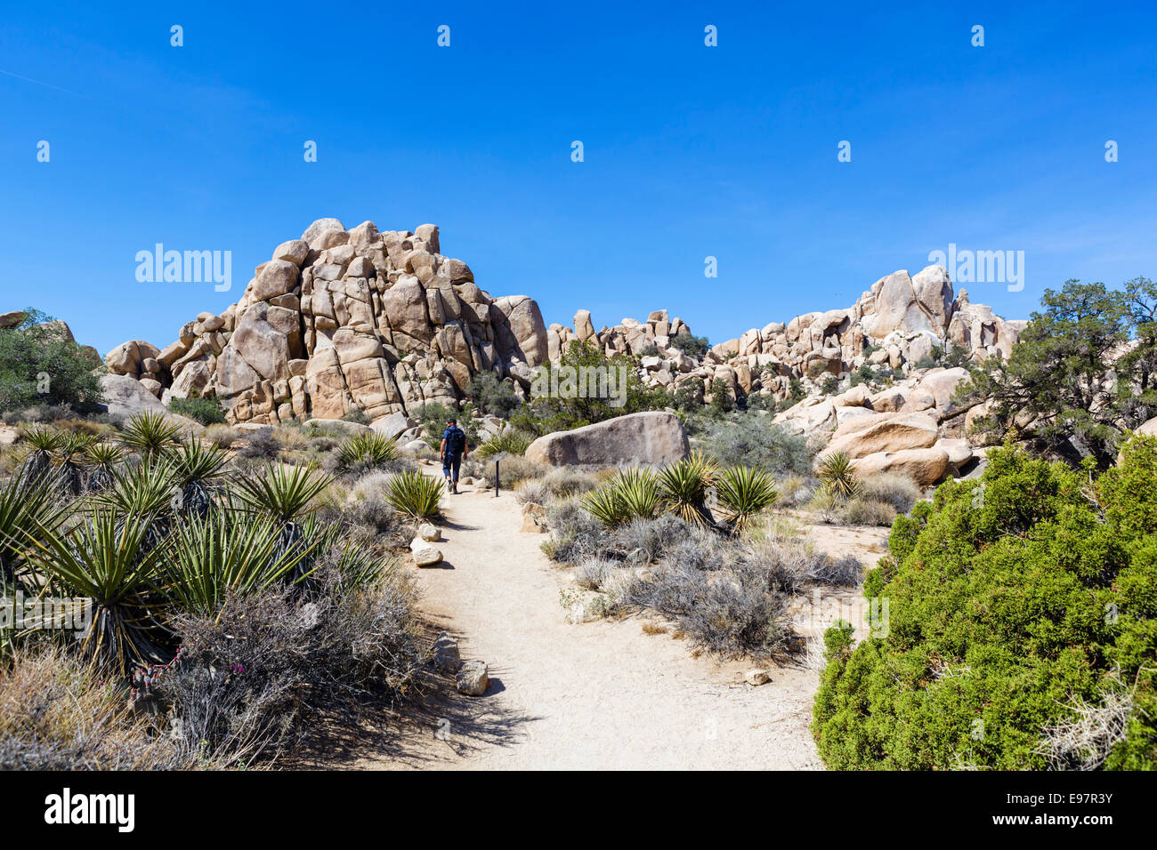 Walker on trail in Hidden Valley, a former cattle rustler hide-out, Joshua Tree National Park, Southern California, - Stock Image