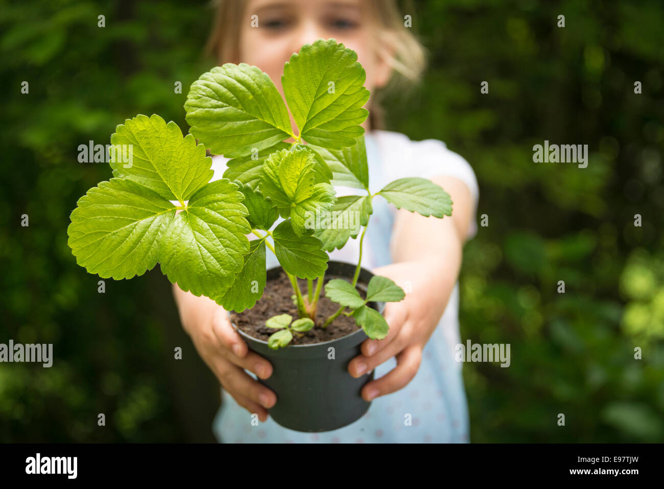 Girl gardening, holding potted plant - Stock Image