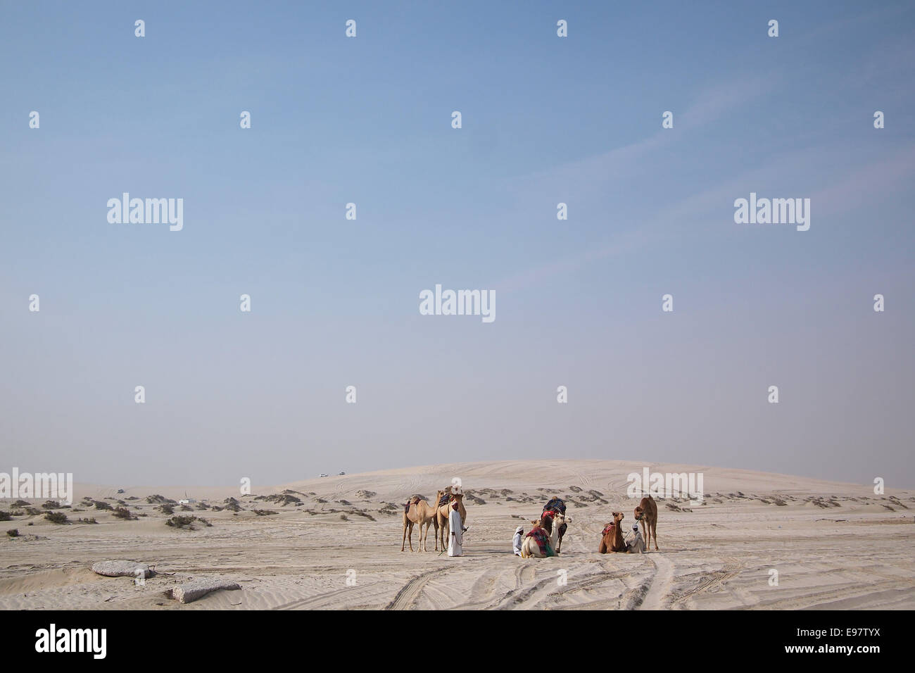 A group bedouin with dromedaries in the sand of the Arabian desert in the Arabian Gulf state Qatar. Stock Photo