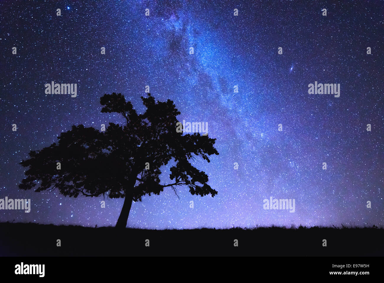 alone tree and milky way - Stock Image
