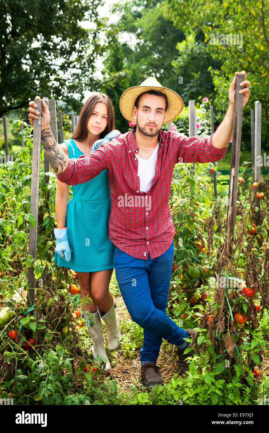 Young couple harvesting tomatoes in vegetable garden Stock Photo