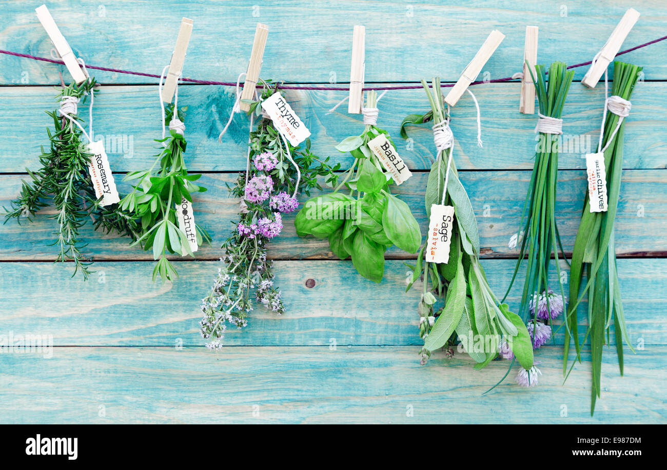 Assorted hanging Herbs on an old and vintage wooden blue background, for seasoning concept. - Stock Image