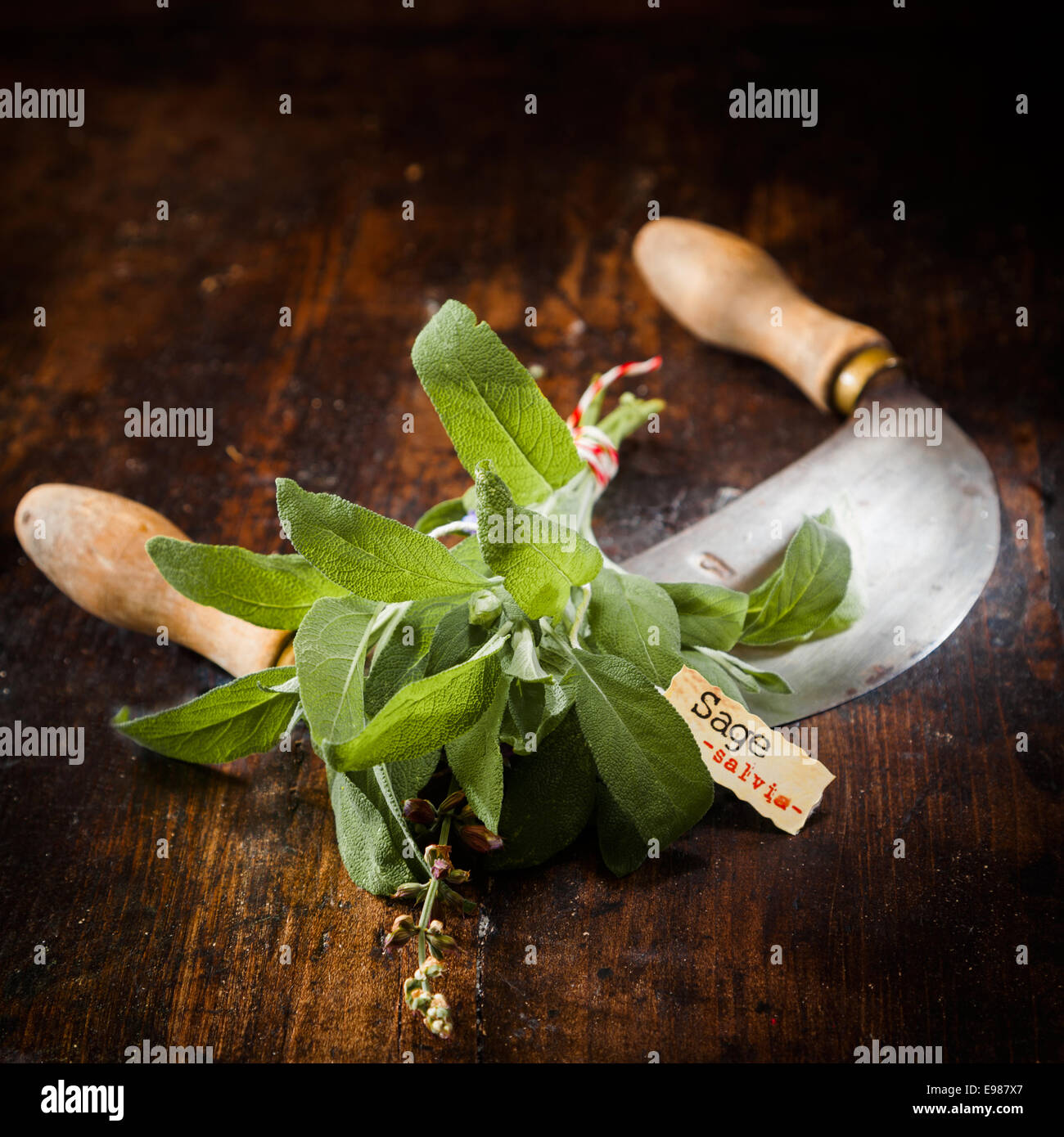 Labeled Sage with a chopping knife on a vintage wooden background - Stock Image