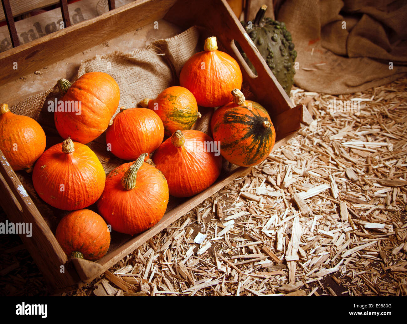 Pumpkins in a crate on a straw background for fall concepts Stock Photo