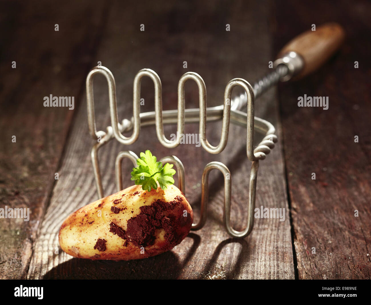 Freshly harvested earthy farm potato on a grungy wooden surface with an old twisted wire potato masher - Stock Image