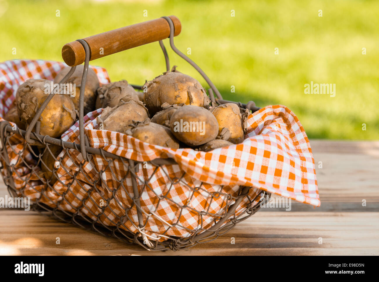 Rustic wire mesh basket, lined with checkered fabric and containing a fresh summer crop of new potatoes, placed - Stock Image