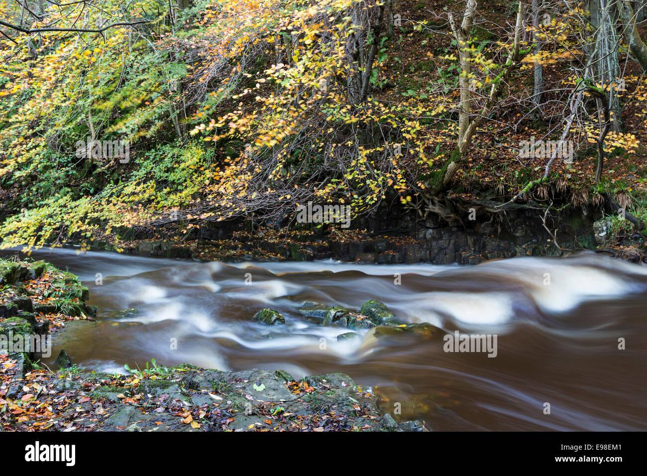 Bowlees Beck in Autumn, Bowlees Upper Teesdale County Durham UK - Stock Image