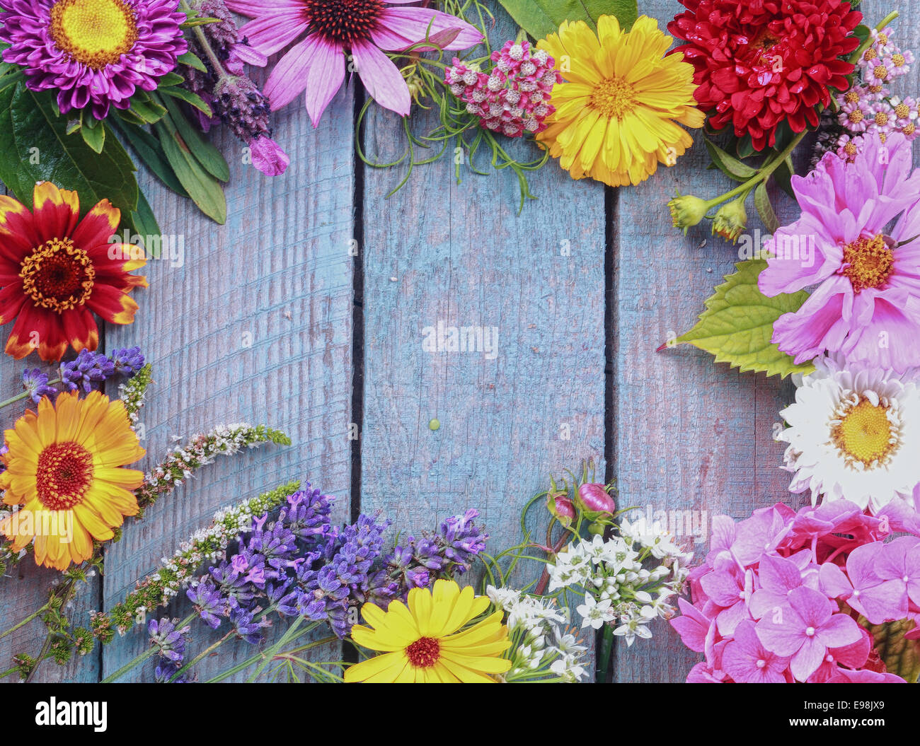 Colorful frame of fresh summer flowers arranged as a border on rustic blue wooden boards with copyspace for your - Stock Image