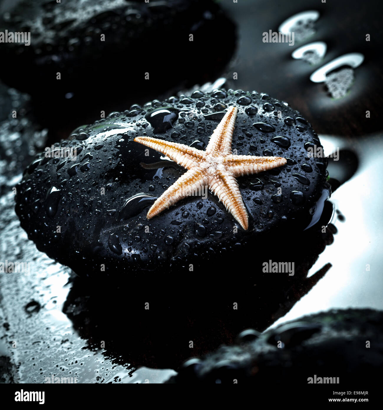 Black therapeutic spa massage stone glistening with water droplets with a small starfish - Stock Image