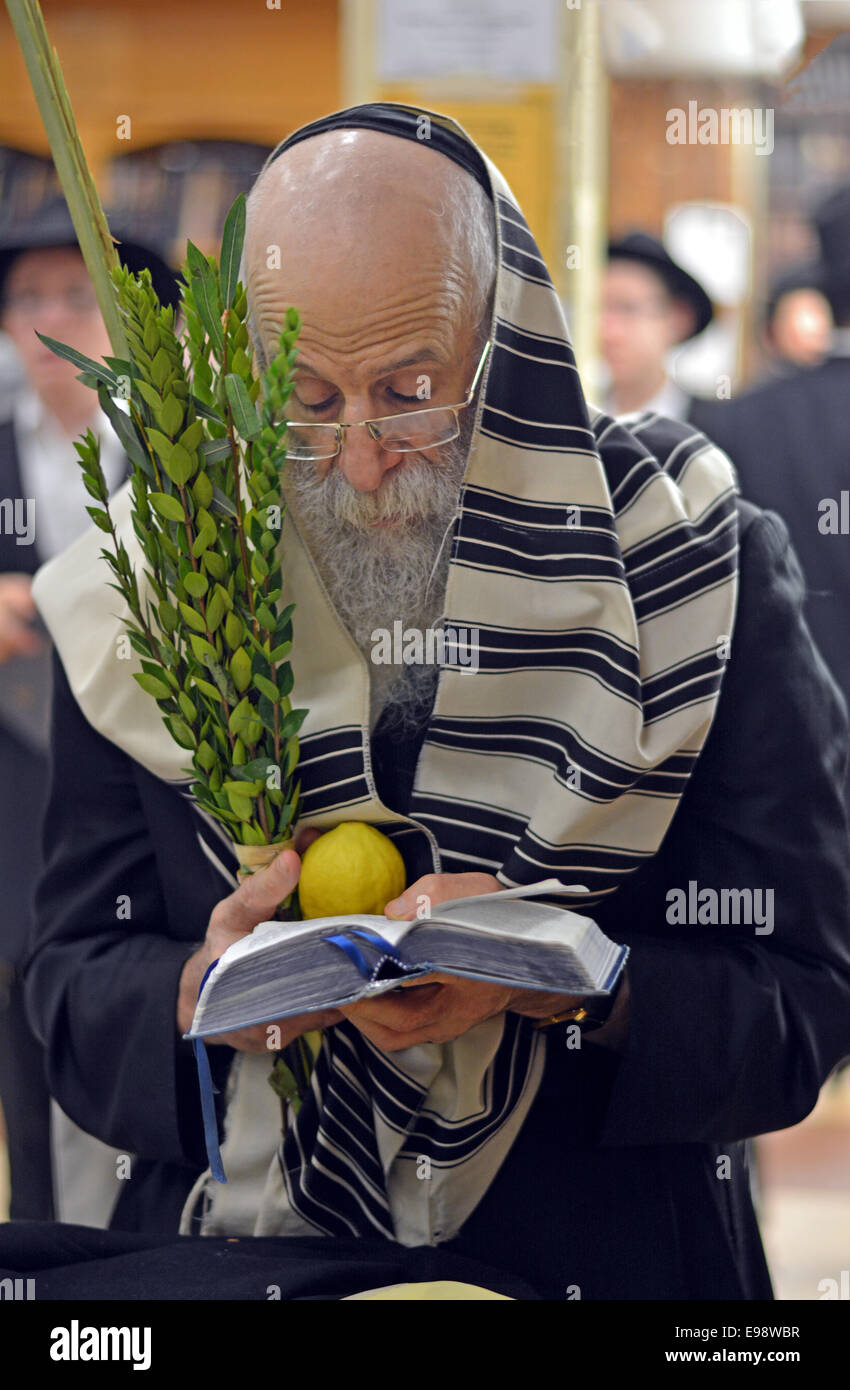 Religious Jewish man praying with an esrog and Lulv during the Jewish holiday of Sukkot at a synagogue in Brooklyn, - Stock Image
