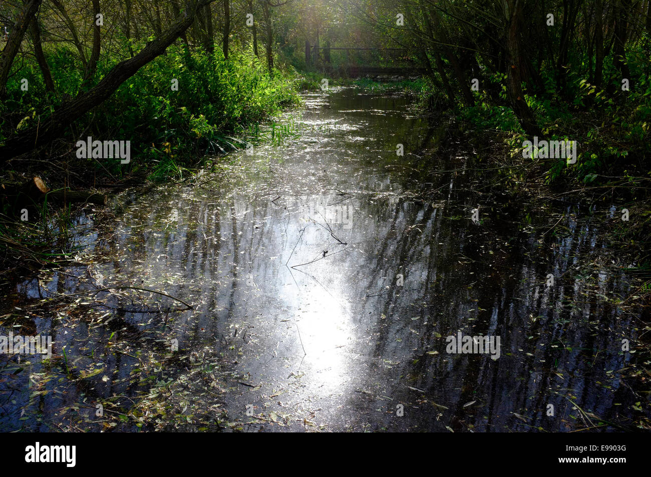 Small stream with sunlight glistening on the water. - Stock Image