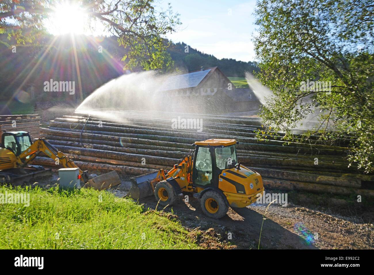 View of a rained wood yard in the Black Forest in Tuebingen, southern Germany, on  Oct. 22, 2009. , southern Germany,. - Stock Image