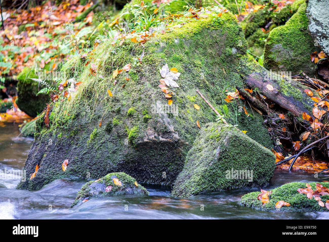 Boulder covered with moss and fallen leaves and running water - Stock Image
