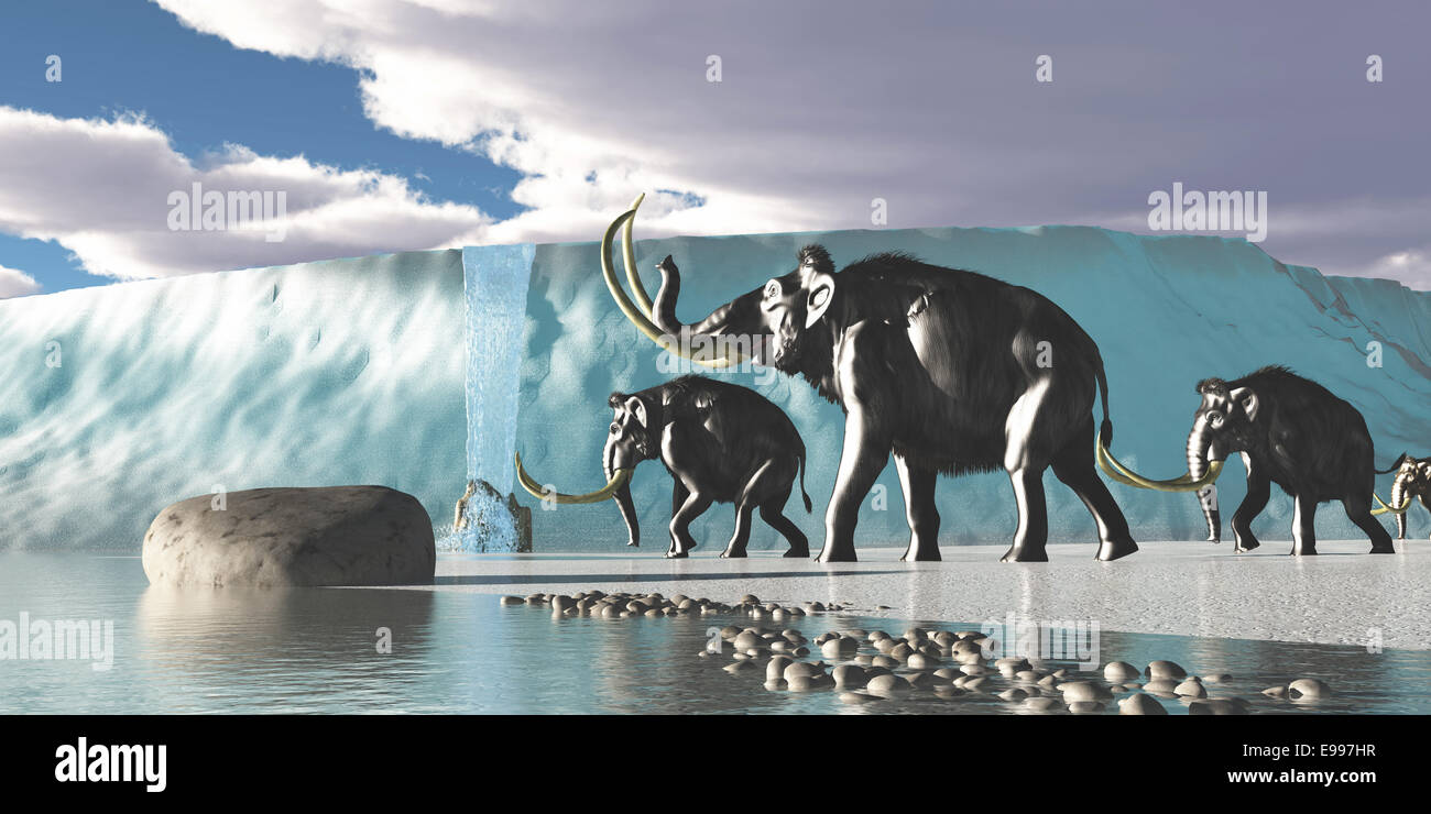 A herd of Woolly Mammoths encounter a huge glacier covering the Arctic territory. - Stock Image