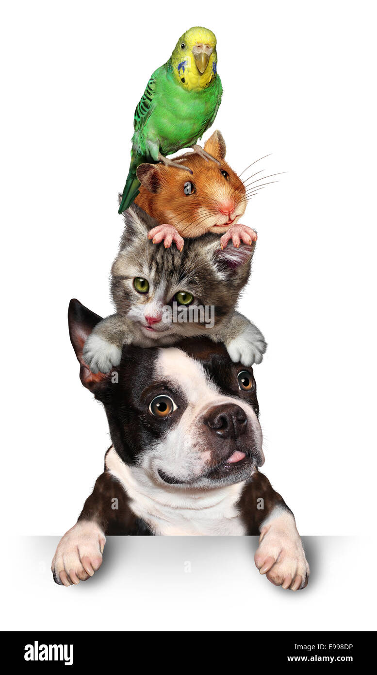Group of pets concept as a dog cat hamster and budgie standing on top of eath other as a symol for veterinary care - Stock Image