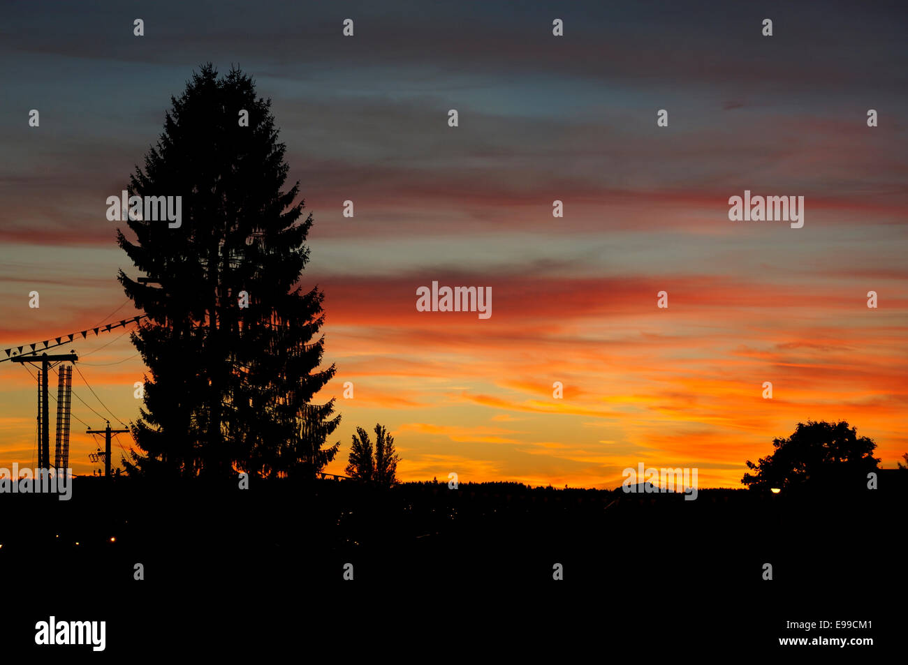 coniferous-tree-silhouetted-by-the-setti