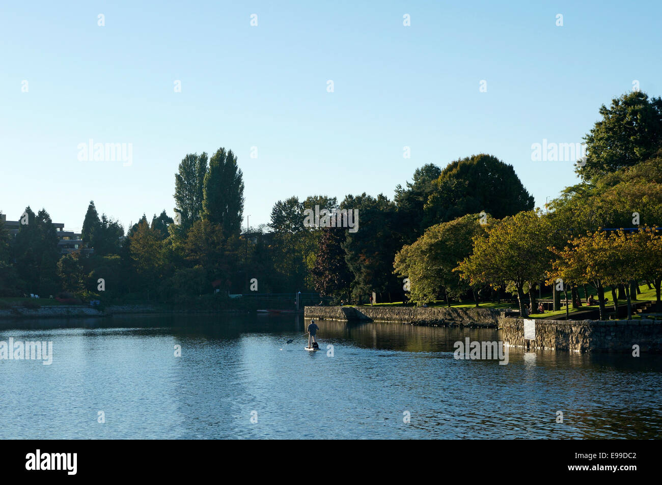 Paddleboarder On Alder Bay With Ron Basford Park On Granville Island Stock Photo Alamy