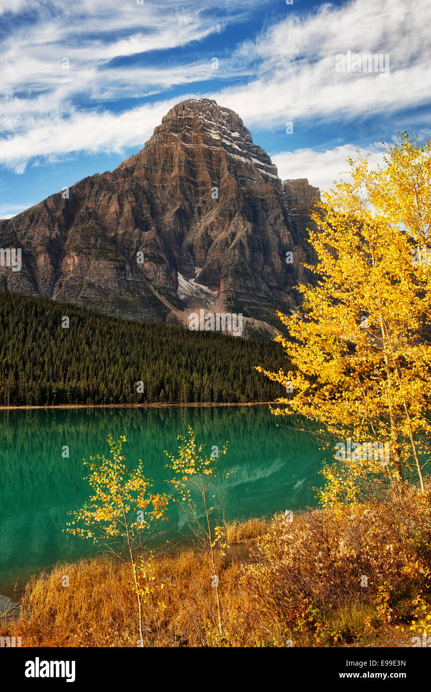 Autumn gold aspen along Waterfowl Lake with Mt Chephren in Alberta's Canadian Rockies and Banff National Park. - Stock Image