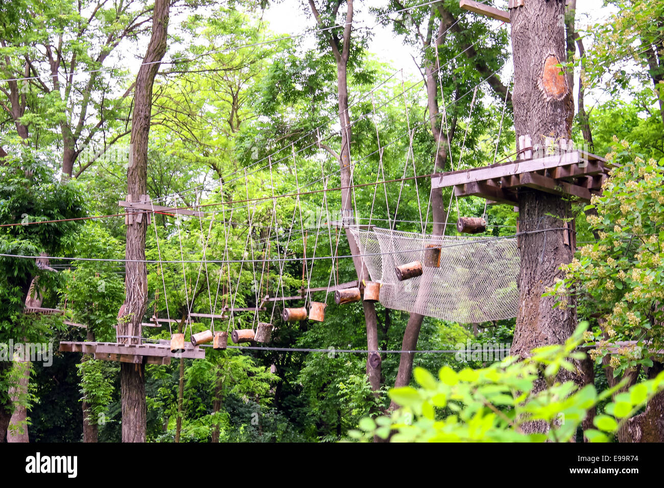 Think, rope swinging bridge pictures