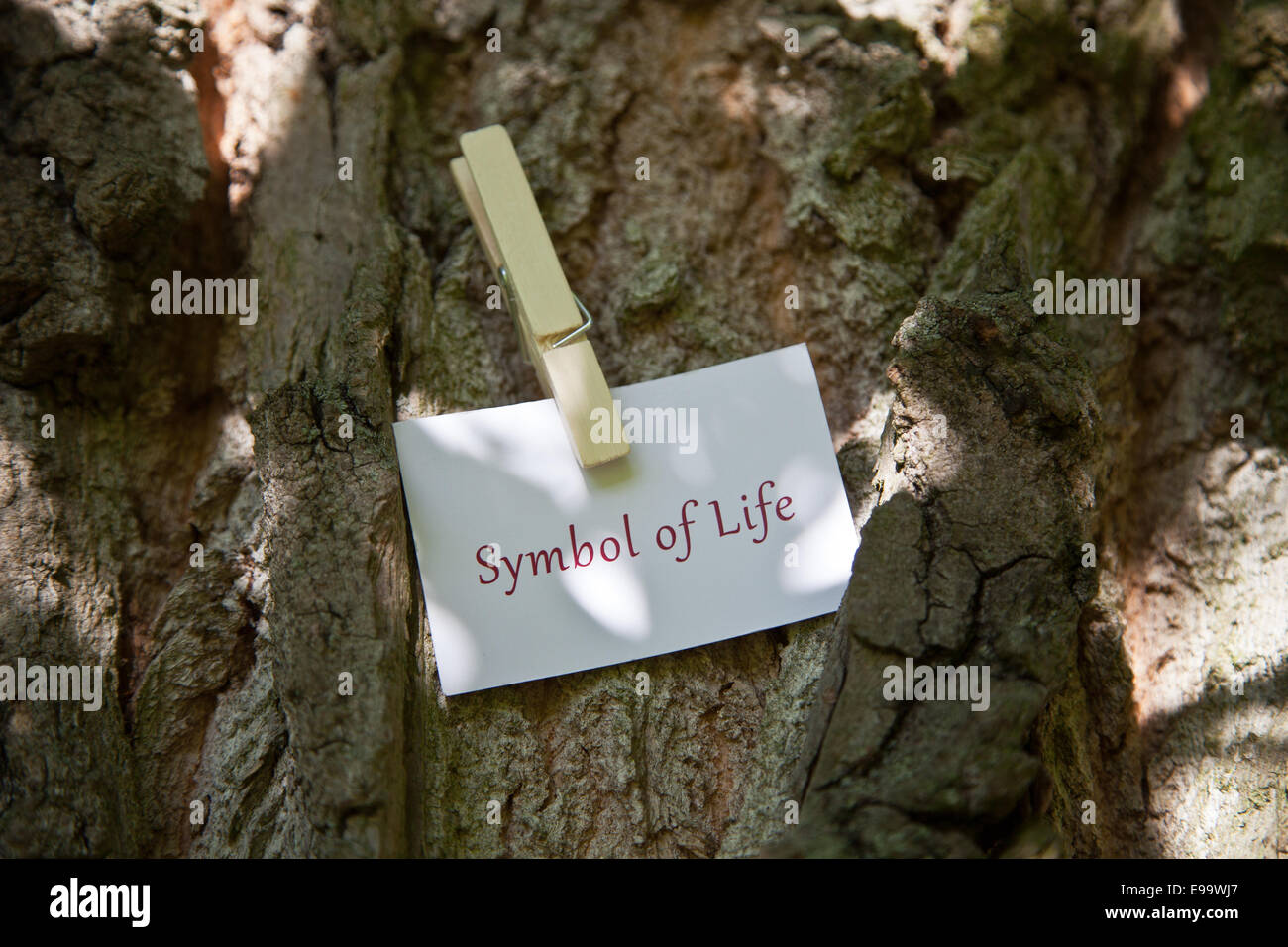 Symbol of Life on paper in nature - Stock Image