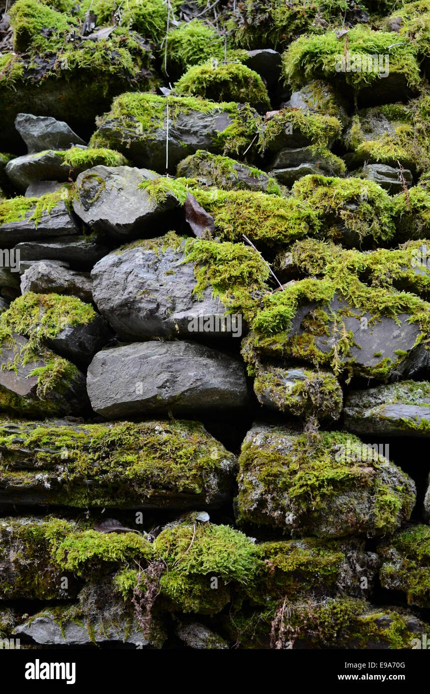 old wall with bog - Stock Image