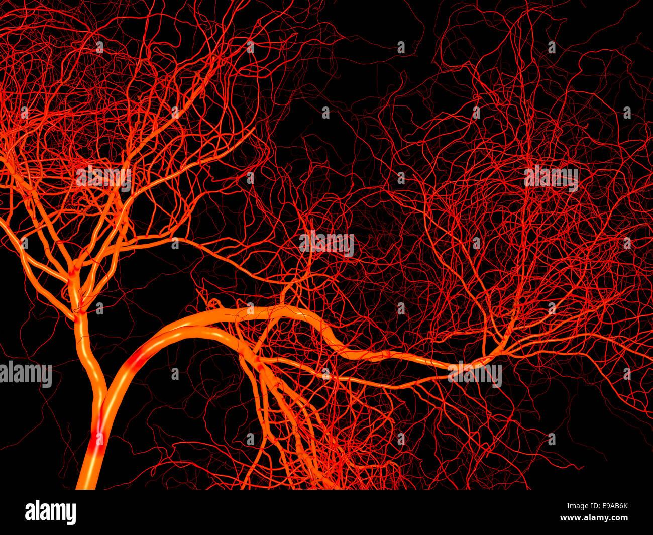 Nervous or blood system of artery and vein. Medical 3d illustration - Stock Image