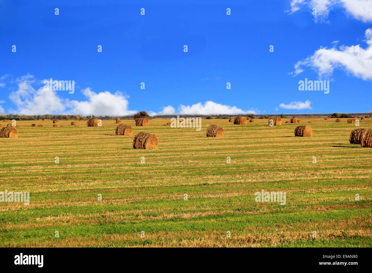 Hay, field and blu sky Stock Photo